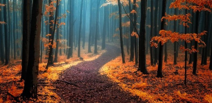 dreamlike-autumn-forests-janek-sedlar-12__880